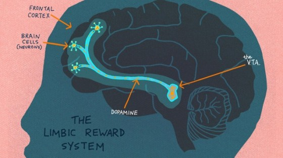 The Limbic Reward System lights up when curiosity is piqued. (LA Johnson/NPR)