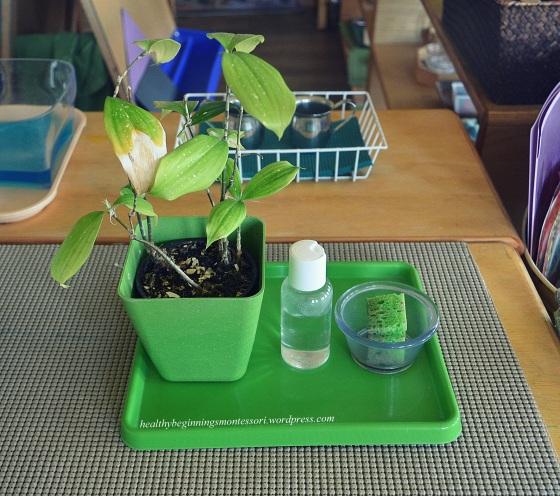 Prepared Environment_Plant Polishing